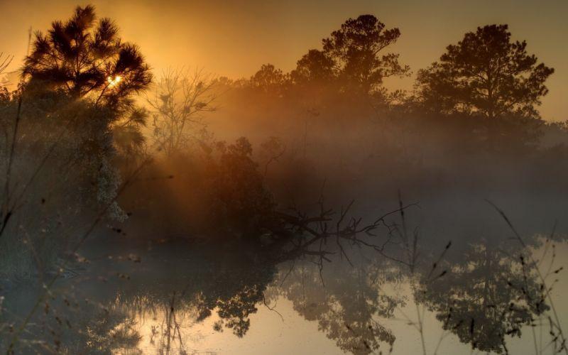 Nature Sky Tree Sunset Fog Lake wallpaper