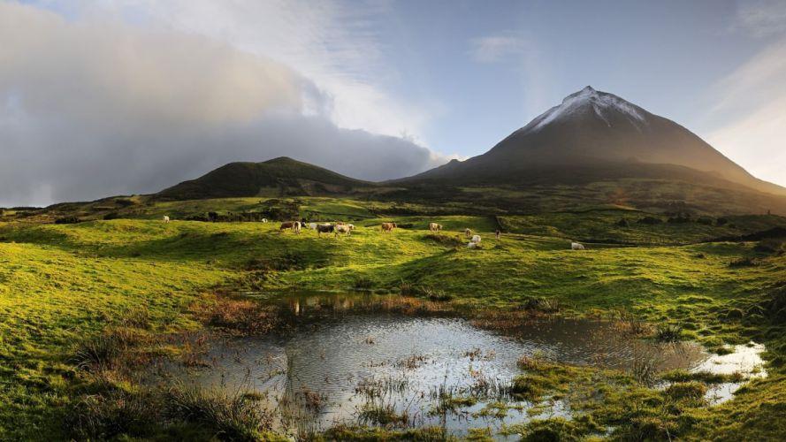 Nature Sky Mountain Field Pond Summer Cow wallpaper