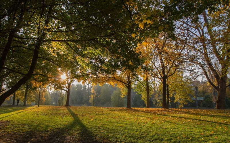 field sunshine forest- wallpaper