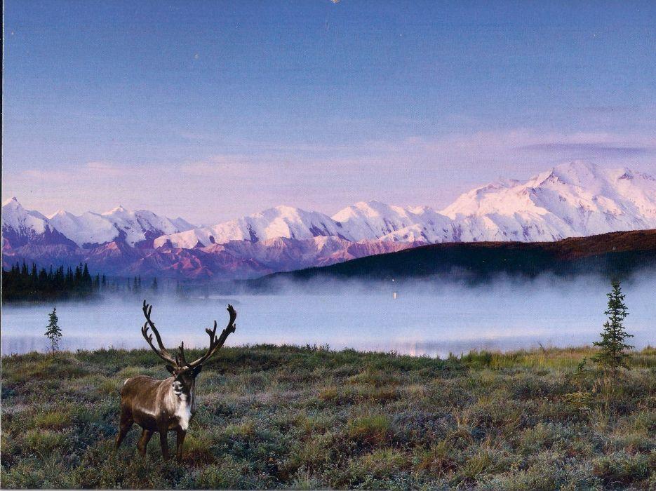 caribou-snow-lake-mountains- wallpaper