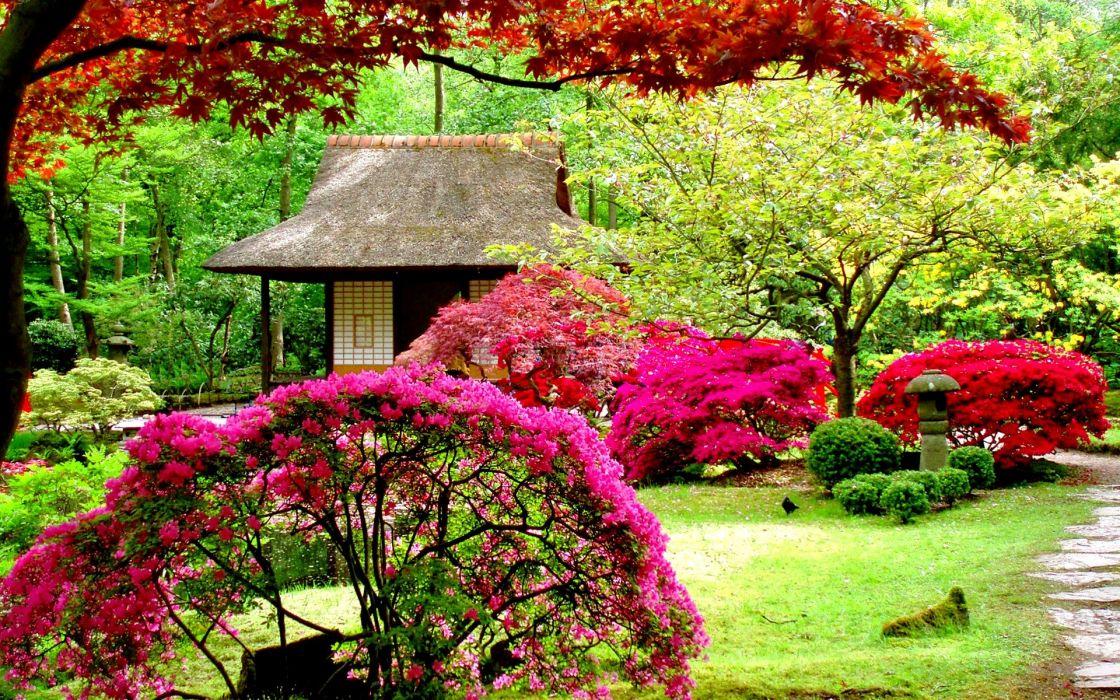 garden flower pink colores wallpaper