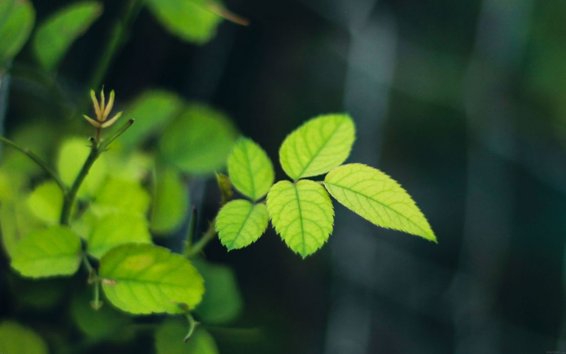 greenish-flower-leaf- wallpaper