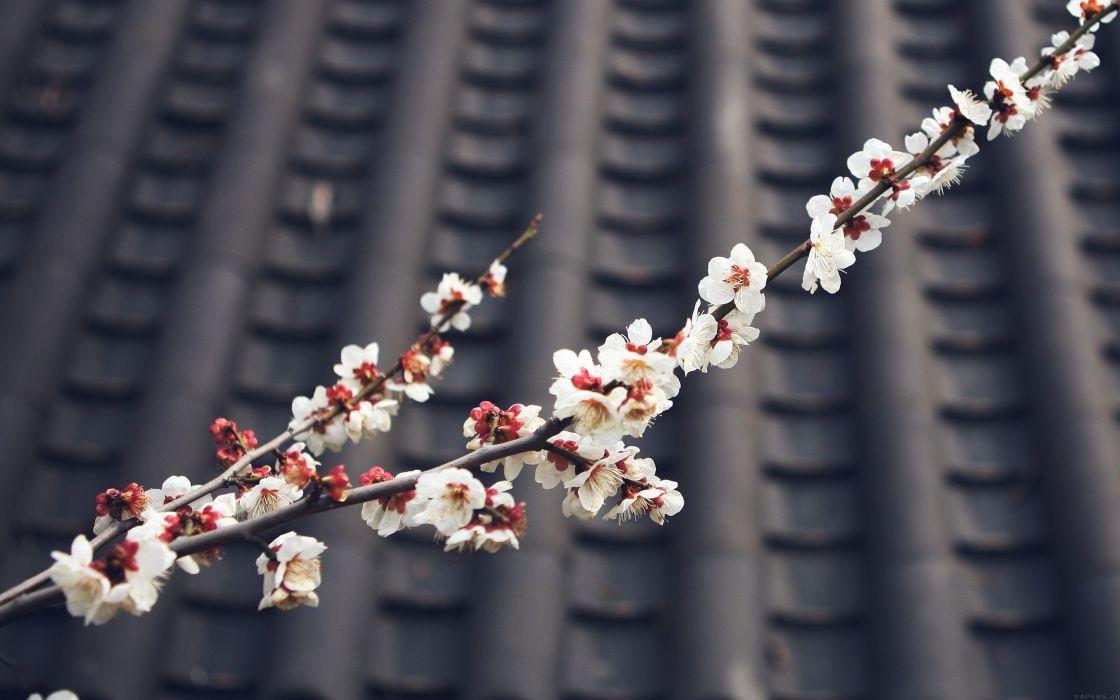 flower-blossom-spring-fun-nature- wallpaper
