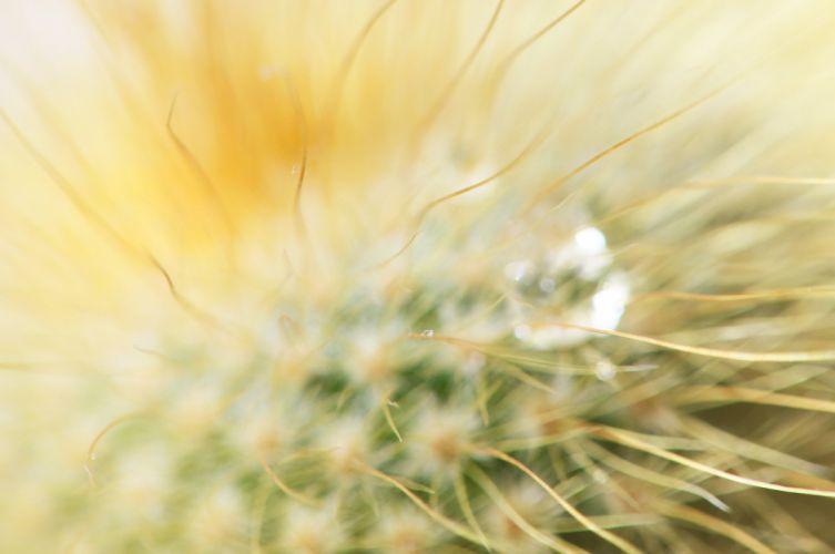 cactus spines drop macro wallpaper