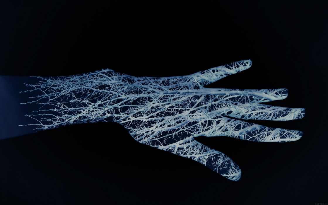 Xray anatomy hand abstract abstraction wallpaper | 2880x1800 ...