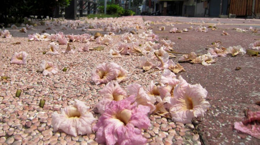 falling petals on the sidewalk wallpaper