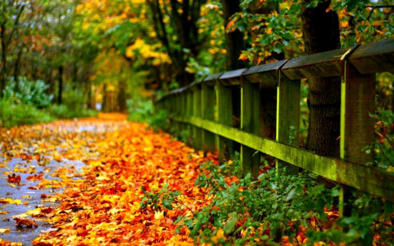 road with autumn leaves wallpaper