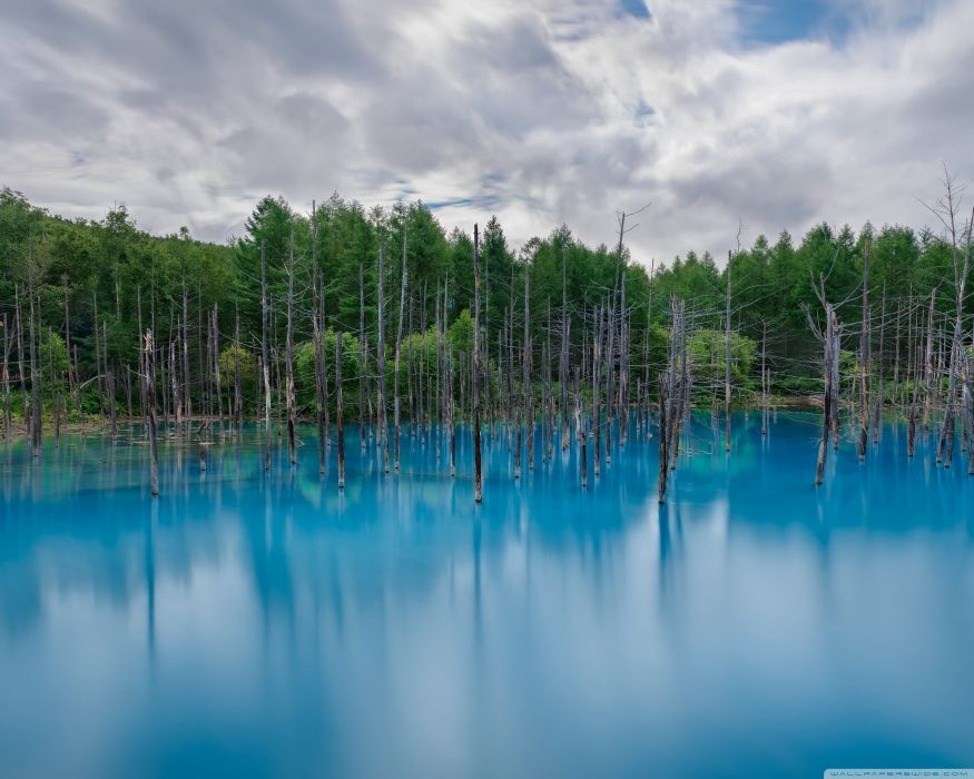 flooded forest wallpaper