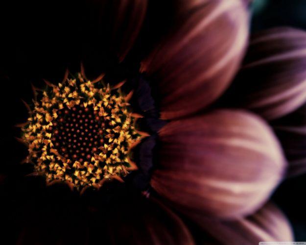 flower dark wallpaper