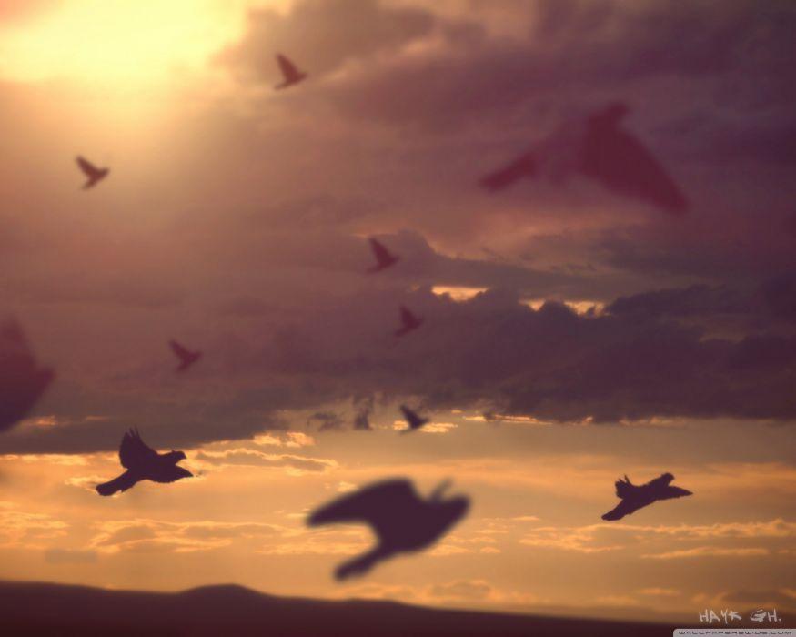 birds sky wallpaper