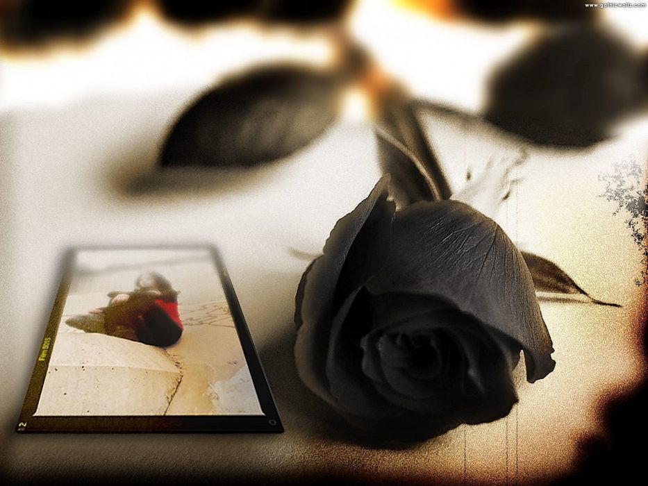 black rose wallpaper