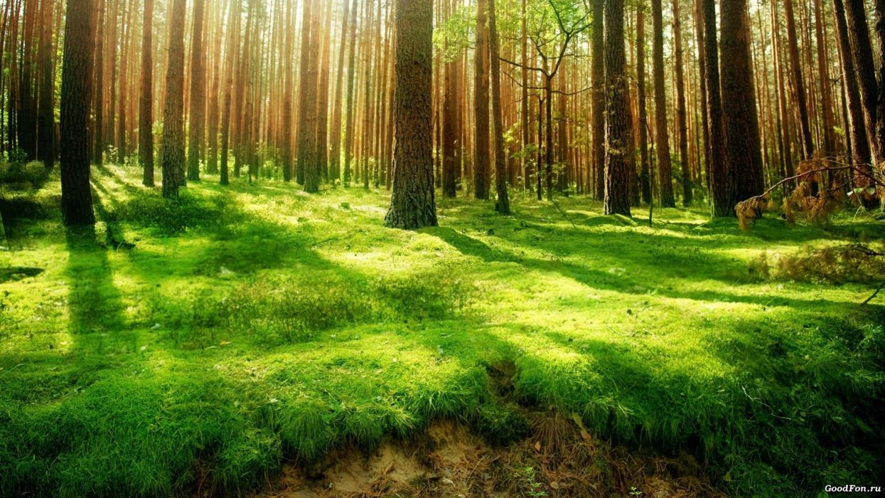 bosque naturaleza arboles hierba wallpaper