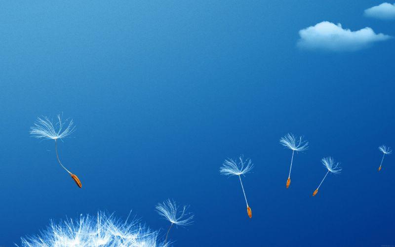 fly-flower-dandelion wallpaper