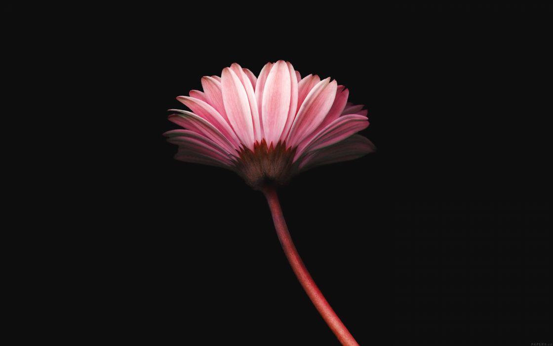 lonely-flower-dark-red-simple-minimal-nature wallpaper