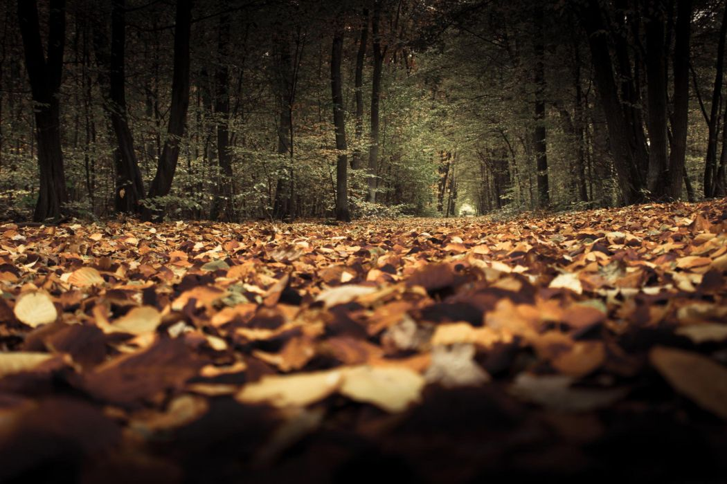 nature forest leaves tree beauty wallpaper