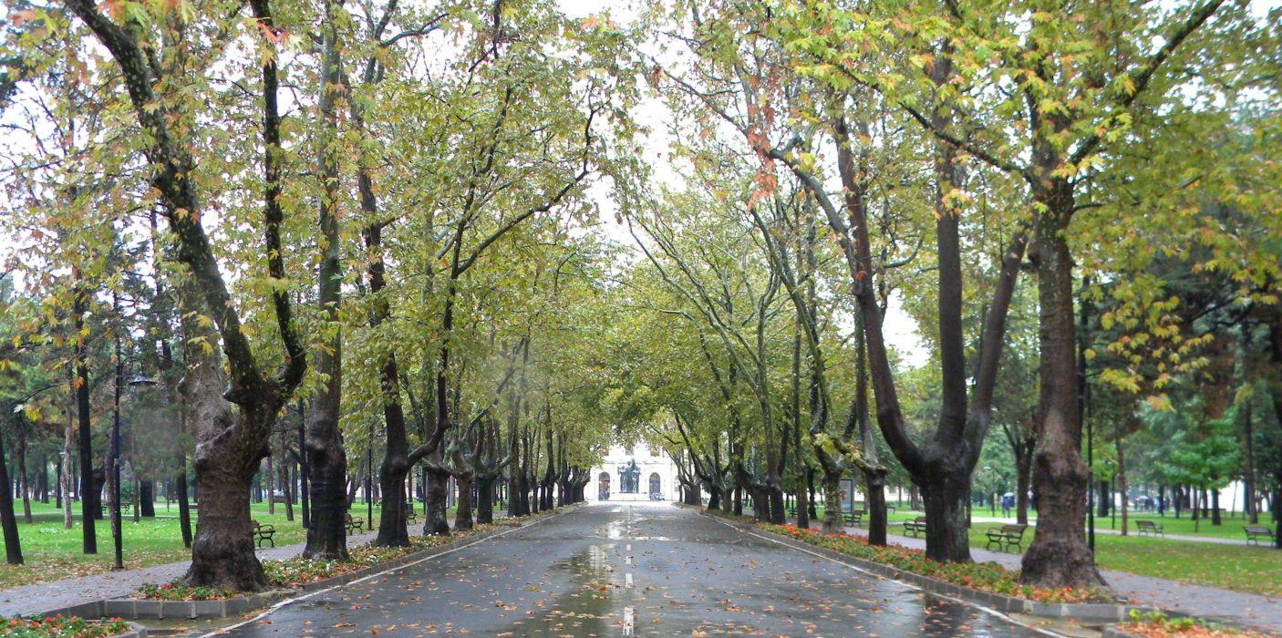 turkey istanbul university trees leaves autumn wallpaper