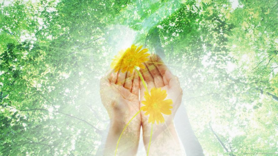 HANDS - flowers sun wallpaper