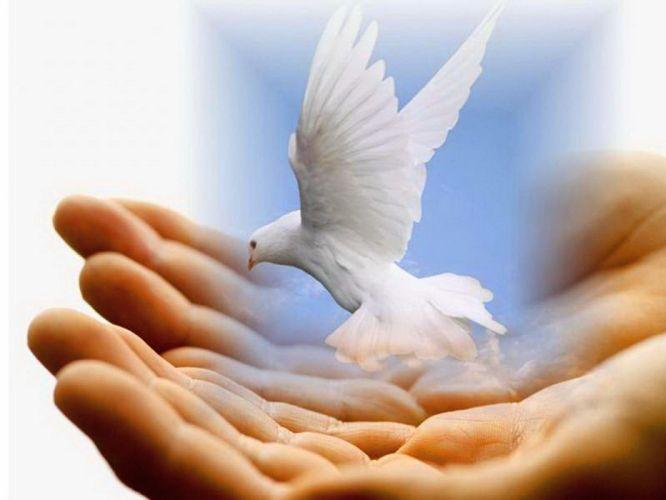 HANDS - peace pigeon wallpaper