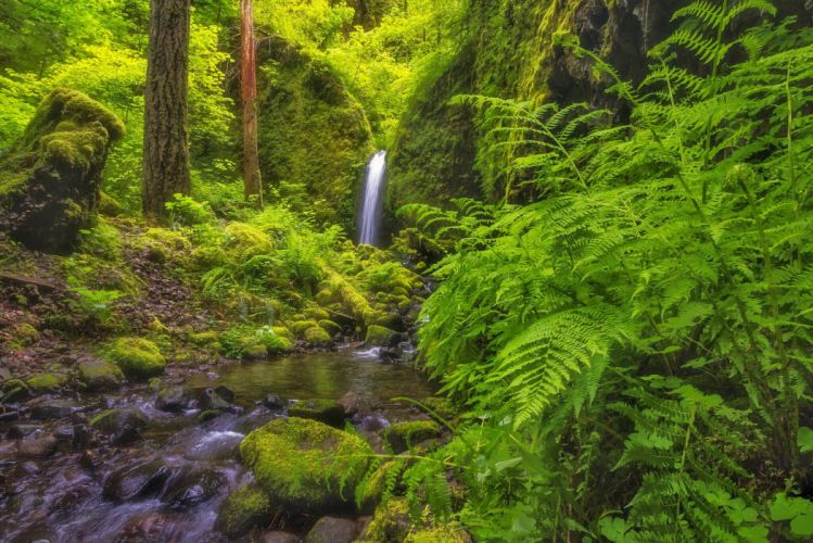 Columbia River Gorge Oregon waterfall river forest fern wallpaper