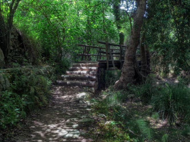 forest bridge trail trees bush shadow Greece Crete wallpaper