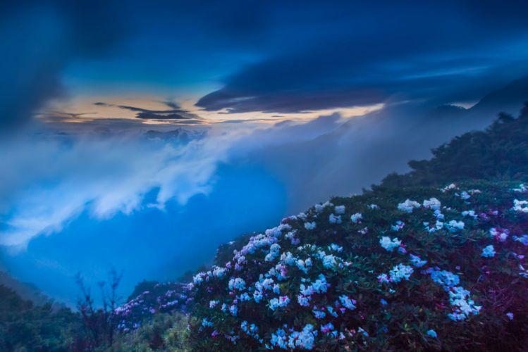 Hehuan Mountain Hehuanshan Nantou Taiwan flower mist fog clouds wallpaper