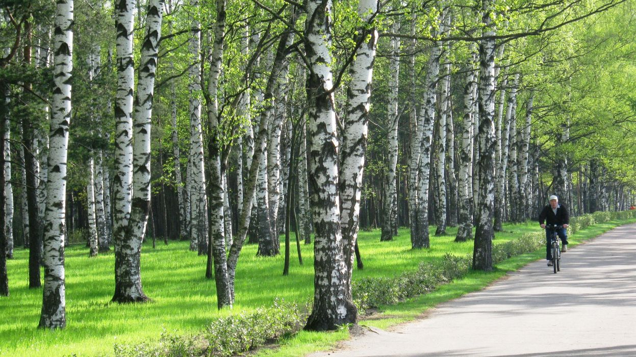 forest trees people path trail bike wallpaper