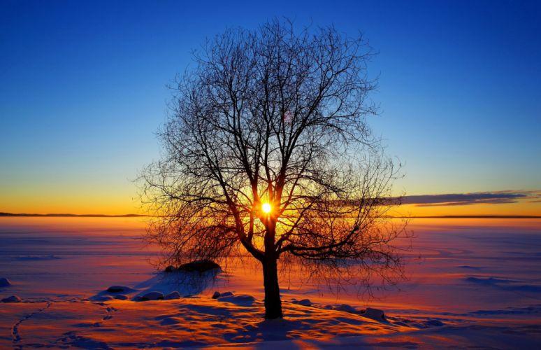 Nature sky sun winter sunset tree snow wallpaper