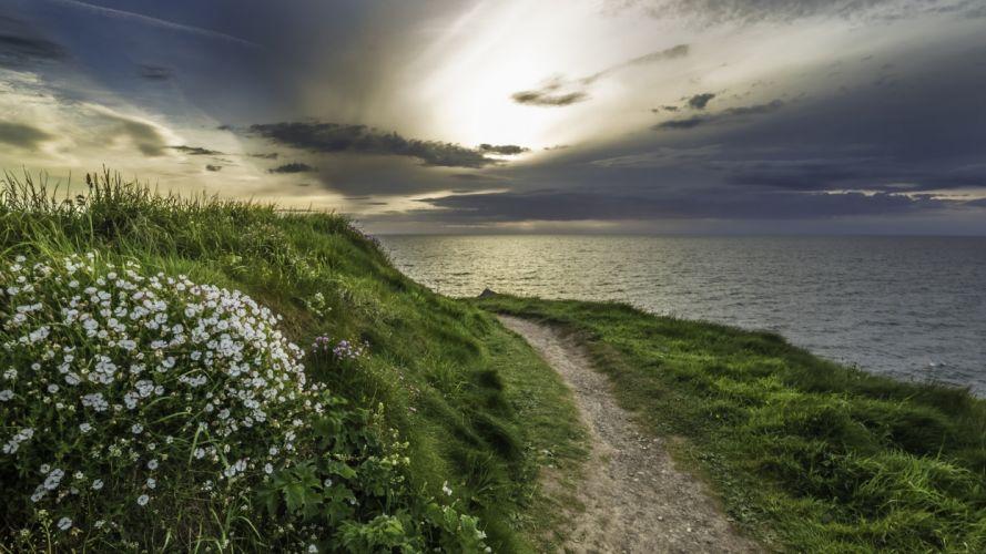 sea walking path flowers grass ocean wallpaper