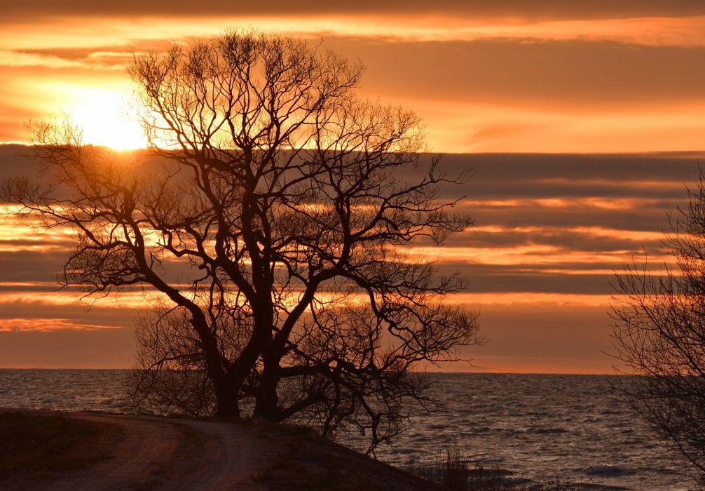 spring evening bay road tree sun dawn ocean sea sunset wallpaper