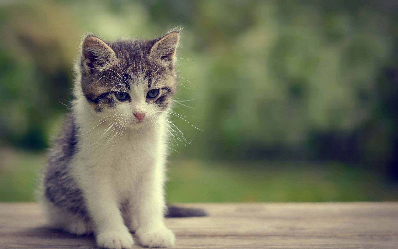 cute cat for 1440x900 - photo #49