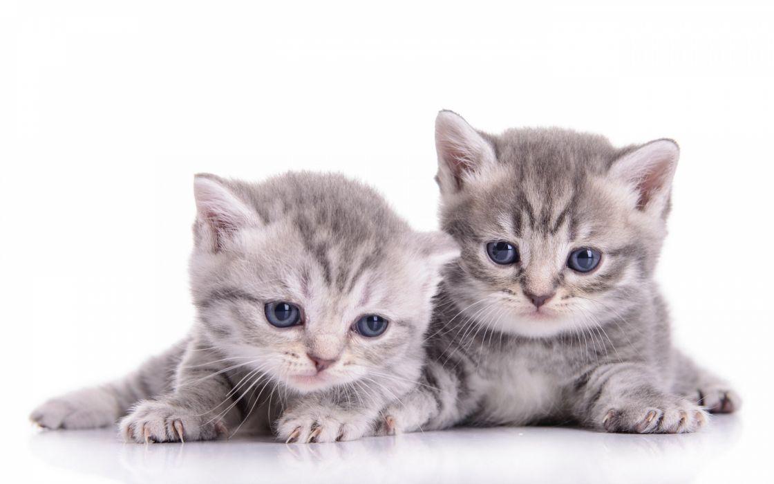 kittens kitten cat cats baby cute s wallpaper