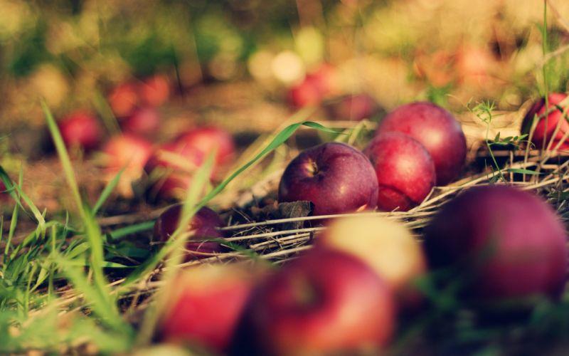 apple fruit wallpaper