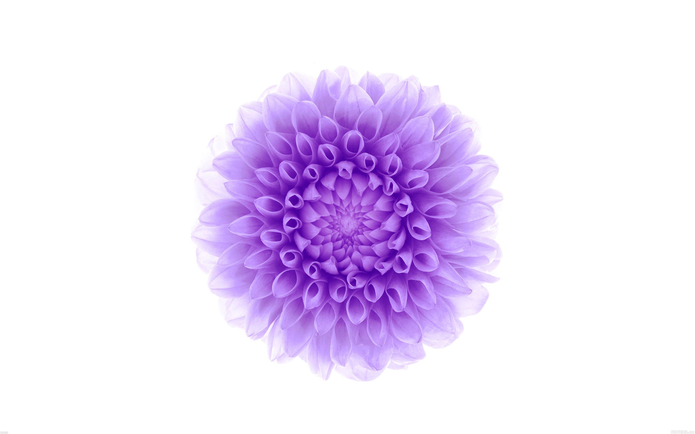 White background purple flower wallpaper | 2880x1800 ...