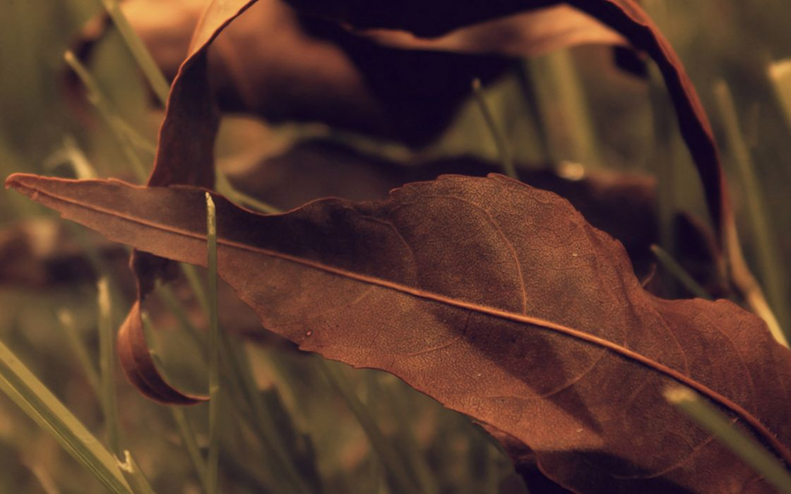 red autumn nature leaves macro wallpaper