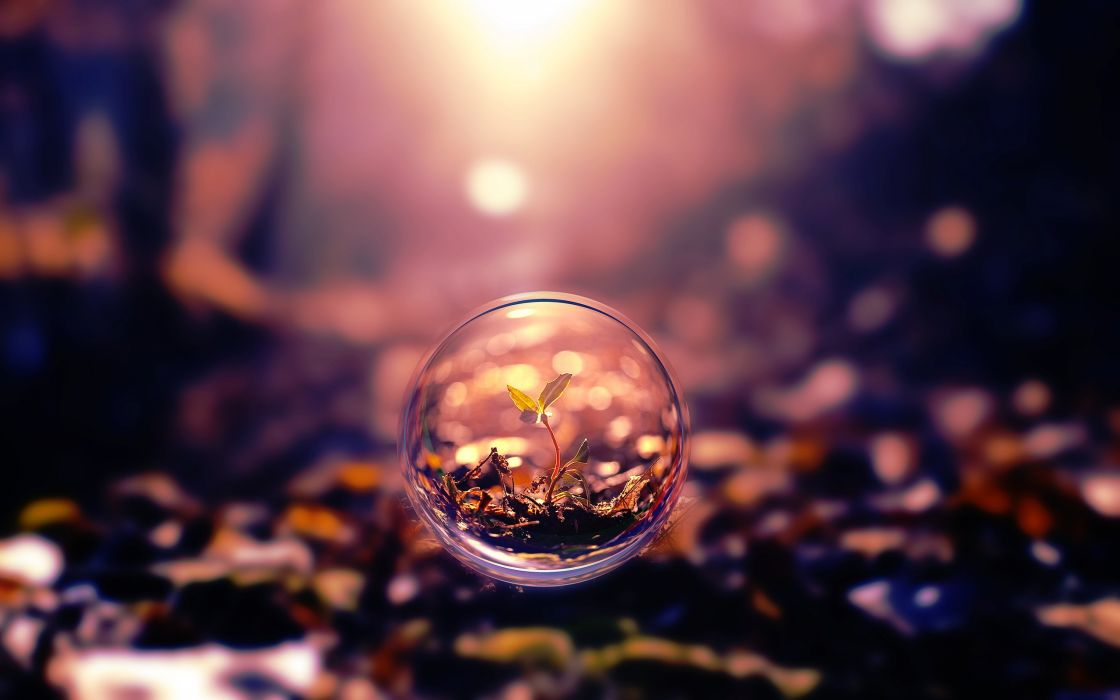 bubble forest sprout beauty beautiful wallpaper