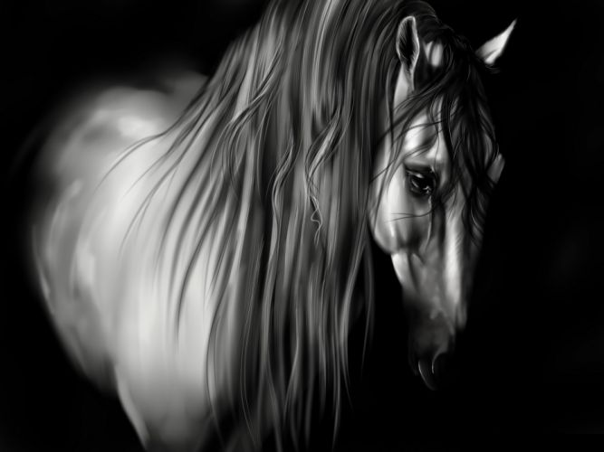 animal horse beautiful b-w wallpaper