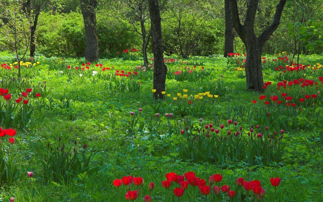 bosque flores arboles naturaleza wallpaper