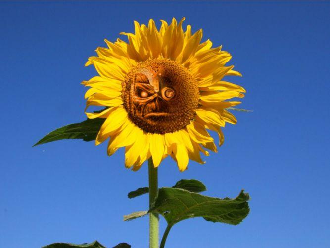 IRON MAIDEN power metal heavy artwork dark evil eddie skull flower sunflower wallpaper