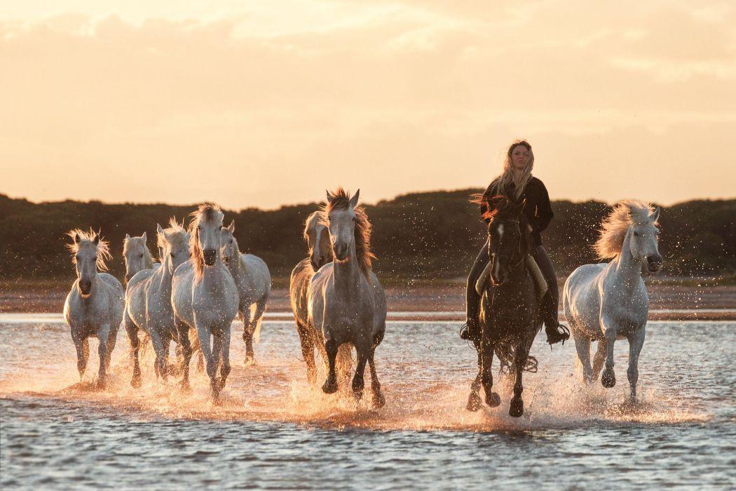 herd of horses horse morning dawn river water girl cowboy mood drops wallpaper