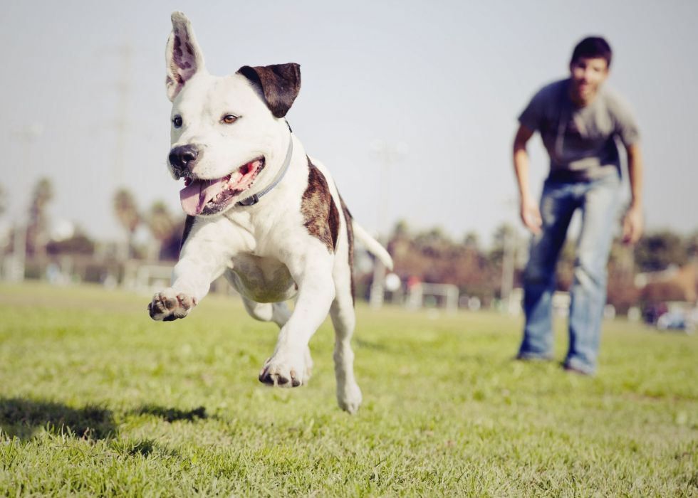 dog field nature dog man mood people wallpaper