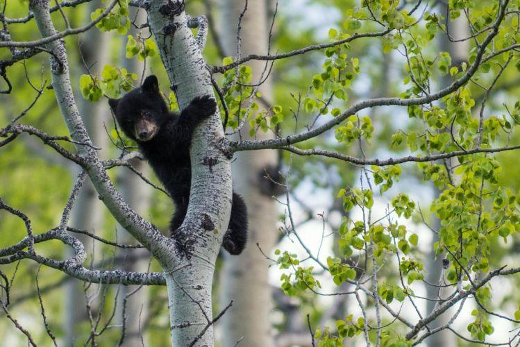 bear teddy black baby forest wallpaper
