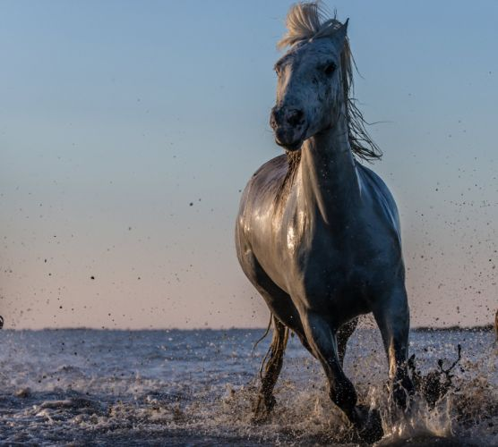 horse water spray lake ocean sea drops wallpaper
