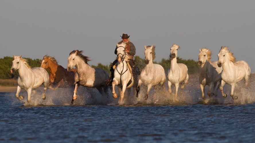 river morning cowboy horseman equestrian horses swim western rustic people d wallpaper