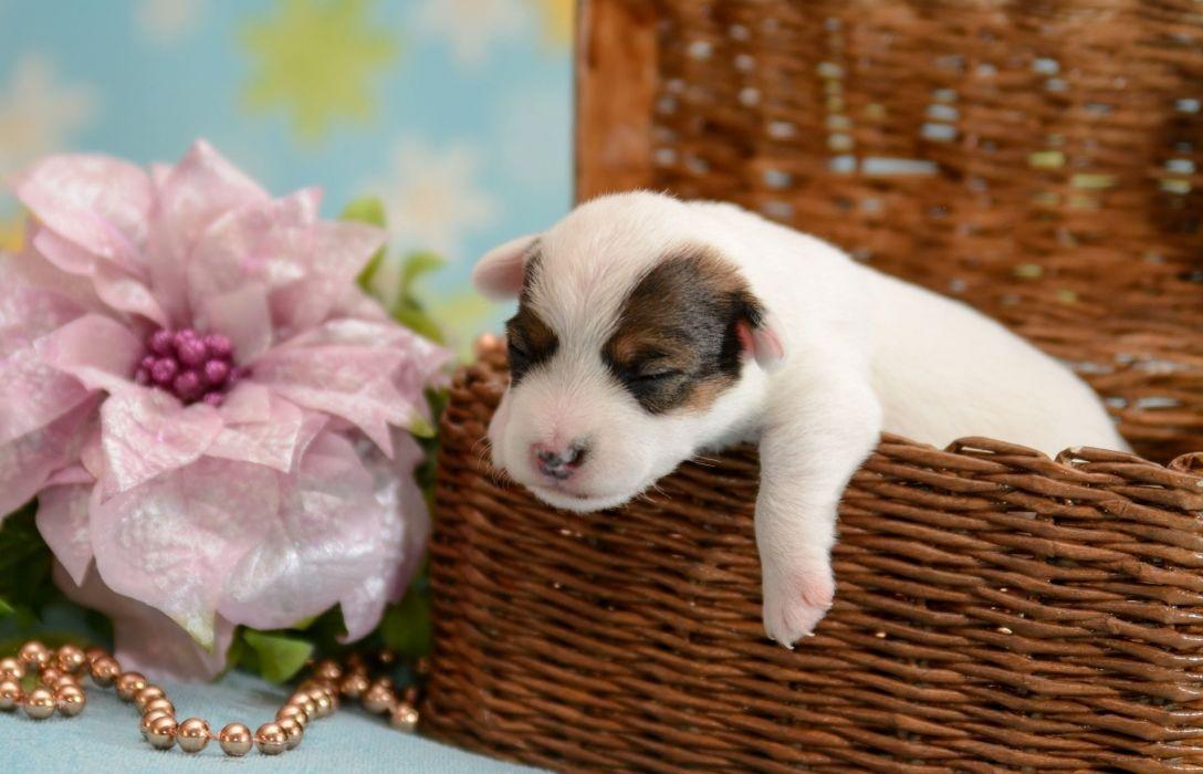 dog puppy baby crumb basket flower g wallpaper