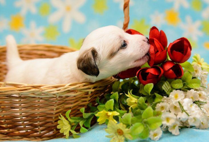 dog puppy baby crumb basket flowers wallpaper