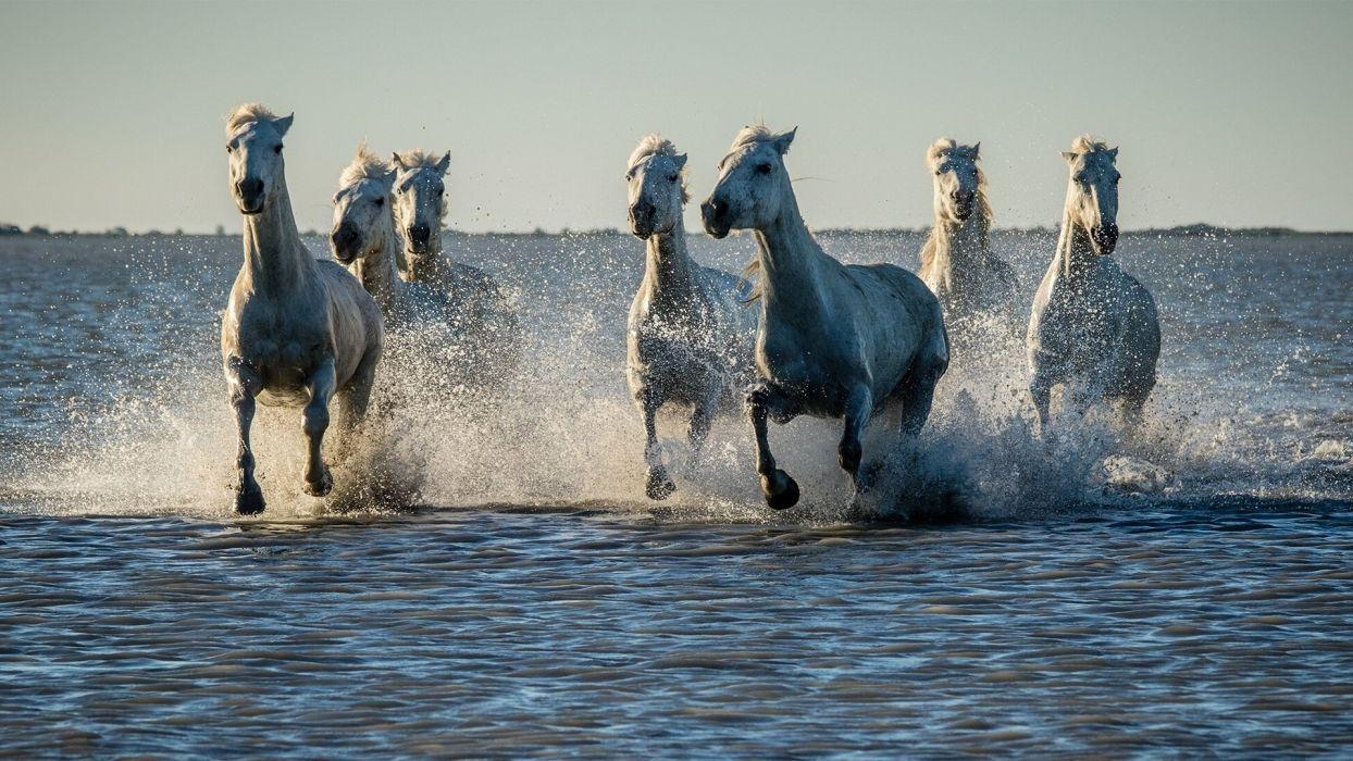 horse drops ocean sea lake river g wallpaper