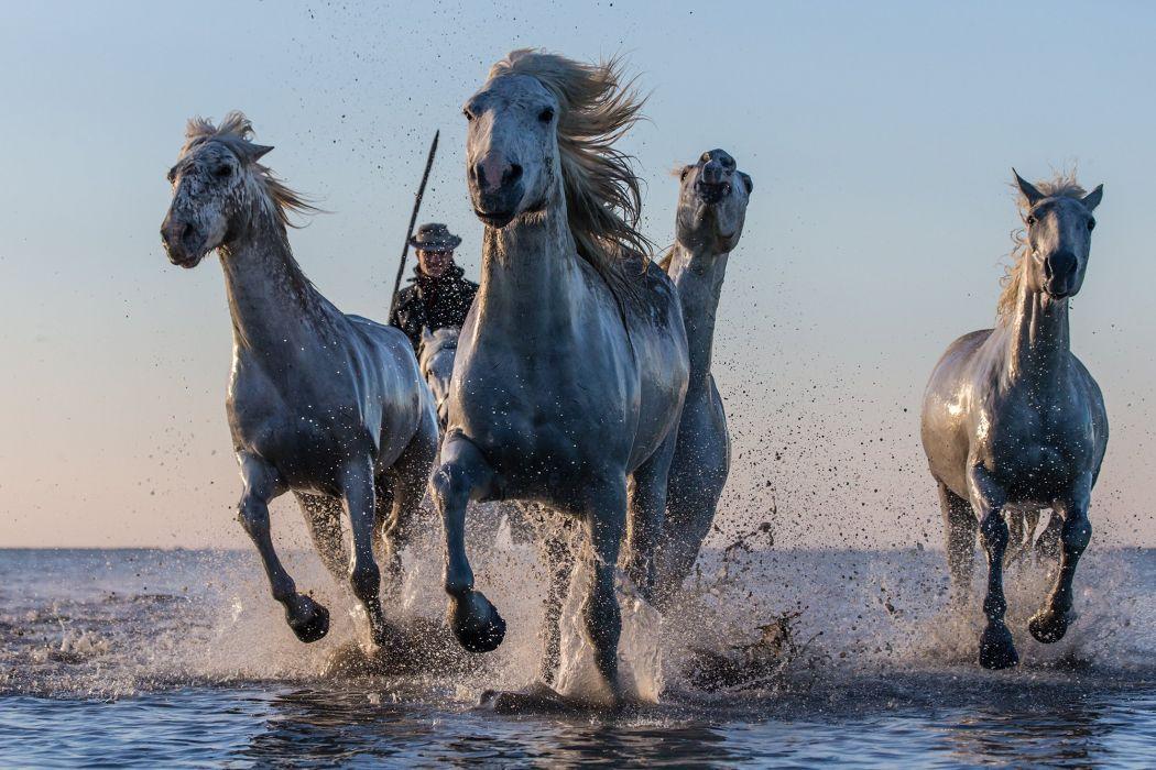 horse drops ocean sea lake river western cowboy people wallpaper