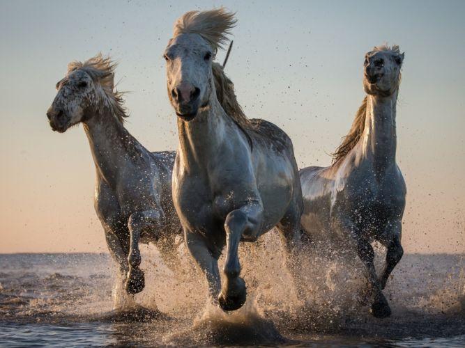 horse drops ocean sea lake river wallpaper