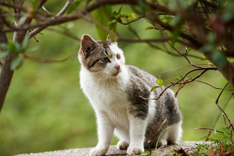 cat kitten branches baby wallpaper