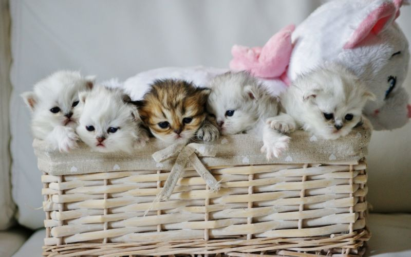 kitten baby cute cat wallpaper